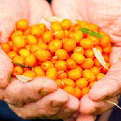 グアマラル シーベリーの栄養素について